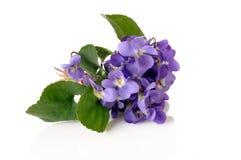 Violetter Blumenstrauß Stockbild