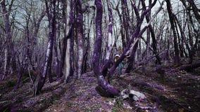 Violetter Märchenwaldschönes athletisches Mädchen geht durch den unwirklichen purpurroten Wald an einem sonnigen Tag Fantasie, un stock footage