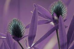 Violetter mit Blumenhintergrund Blauer Klee der Wildflowers auf einem bokeh Hintergrund Nahaufnahme Weicher Fokus Stockfotos