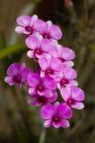 Violetter schöner Blumenstrauß der Orchideen Lizenzfreies Stockfoto