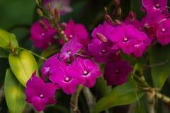 Violetter schöner Blumenstrauß der Orchideen Stockfotos