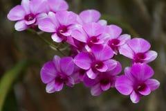 Violetter schöner Blumenstrauß der Orchideen Stockfoto