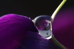 Violetter Tropfen Lizenzfreie Stockbilder