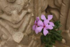 Violetter Vinca und thailändischer Tempelwandhintergrund Stockfotografie