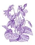 violettes illustration de vecteur