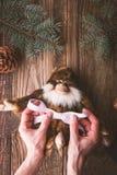 Violettes Band auf einem Affen binden, spielen Sie Vertikale Stockfoto
