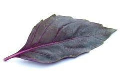 Violettes Basilikumblatt Stockfoto
