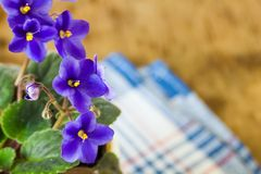 Violettes bleues douces Photos stock