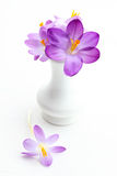 Violettes crosus im Vase für Frühling Stockbilder