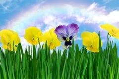 Violettes dans l'herbe Images libres de droits