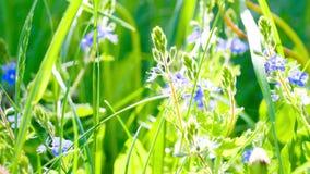 Violettes dans le soleil lumineux banque de vidéos