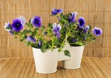 Violettes de ressort sur le fond en bambou Image stock