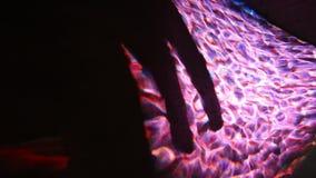 Violettes Licht der Projektion auf der Wand - furchtsamer Schatten stock video footage
