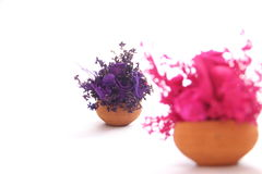 Violez et dentelez le bouquet de fleur sur le blanc Photo stock
