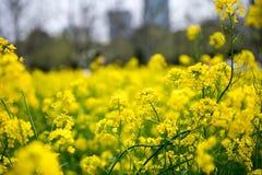 Violez la fleur Photo libre de droits