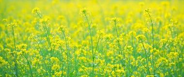Violez la fleur Images stock