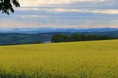 Violez le champ avec la vue à Saxon Suisse photographie stock libre de droits