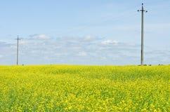 Violez le champ sur le fond de ligne électrique et de ciel bleu Photo libre de droits