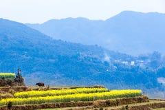 Violez les fleurs et les bâtiments antiques chinois dans Wuyuan Photographie stock