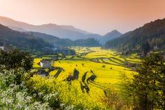 Violez les fleurs et les bâtiments antiques chinois dans Wuyuan Photos stock