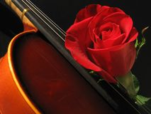 Violin. Hot of part of a violin with a rose on it. Shot with a Canon Powershot A520 camera Royalty Free Stock Photo