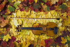 Violin against the backdrop of autumn foliage Stock Photos