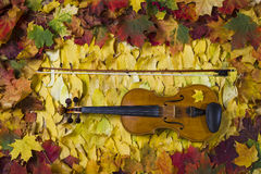 Violin against the backdrop of autumn foliage Stock Photography