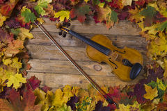 Violin against the backdrop of autumn foliage Royalty Free Stock Photos