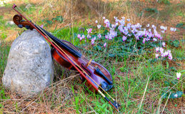 Violin against the glade of forest flowers Stock Photography