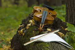 Violin in autumn forest Stock Photo