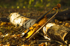 Violin in autumn forest Royalty Free Stock Photography