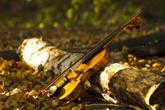 Violin in autumn forest Stock Image