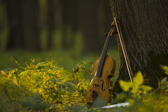 Violin in autumn forest Royalty Free Stock Images
