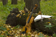 Violin in autumn forest Royalty Free Stock Photo