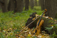 Violin in autumn forest Royalty Free Stock Image