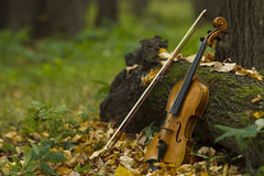Violin in autumn forest Royalty Free Stock Photos