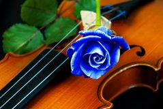 Violin and blue rose Royalty Free Stock Images