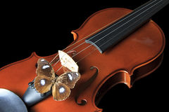 Violin and butterfly Stock Images