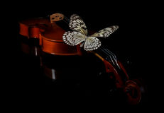 Violin and butterfly. Stock Photography
