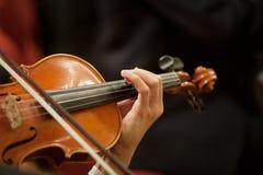 Violin Royalty Free Stock Photo