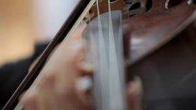 Violin stock video