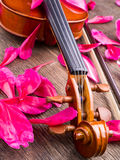 Violin and flower petals Stock Photography