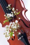 Violin and flowers royalty free stock photography