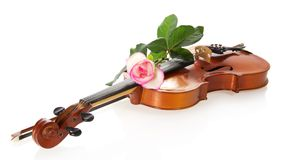 Violin and gentle rozy Stock Image