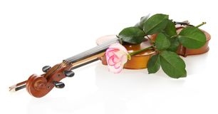 Violin and gentle rozy Stock Photography