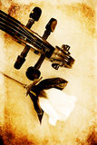Violin Head and Rose Royalty Free Stock Images