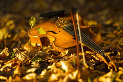 Violin lying on the fallen leaves Royalty Free Stock Photography