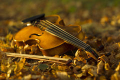 Violin lying on the fallen leaves Royalty Free Stock Images