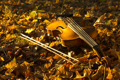 Violin lying on the fallen leaves Stock Image
