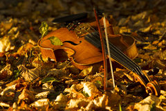 Violin lying on the fallen leaves Royalty Free Stock Photo